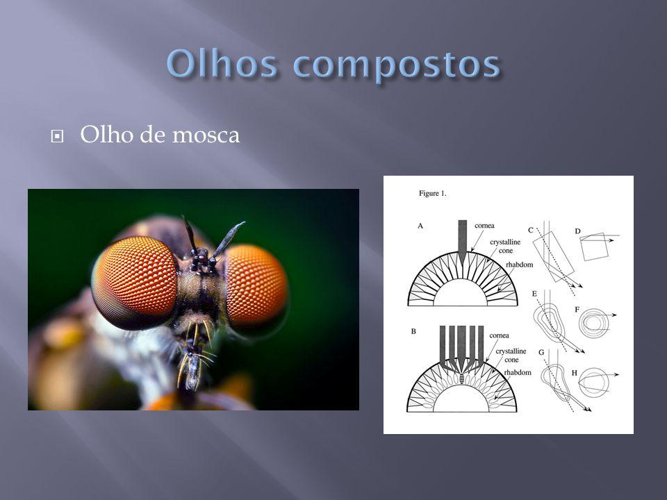 Olhos compostos Olho de mosca