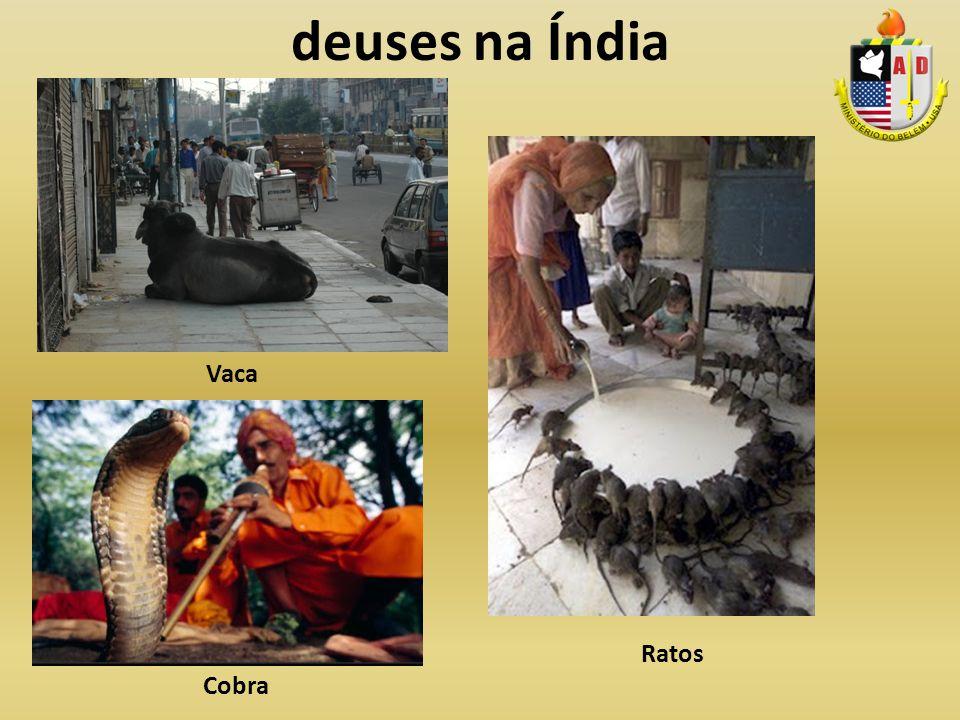 deuses na Índia Vaca Ratos Cobra