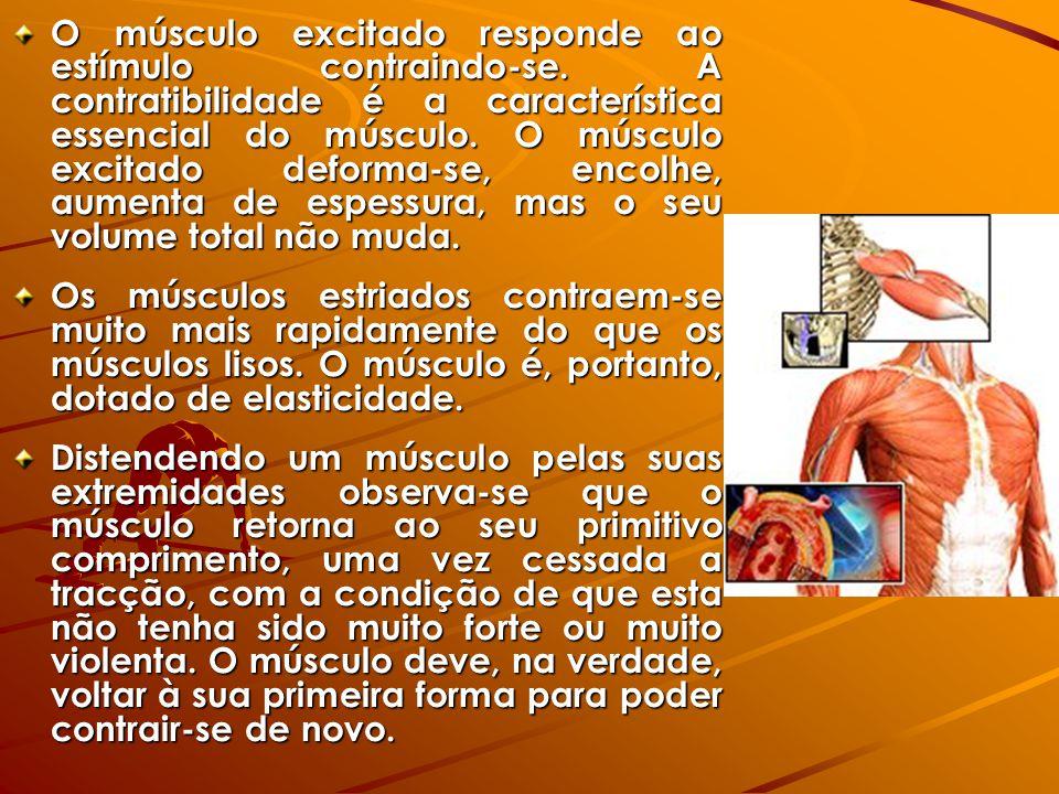 O músculo excitado responde ao estímulo contraindo-se