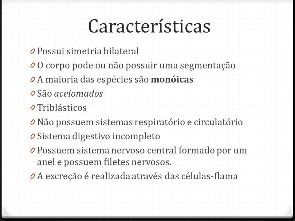 Características Possui simetria bilateral