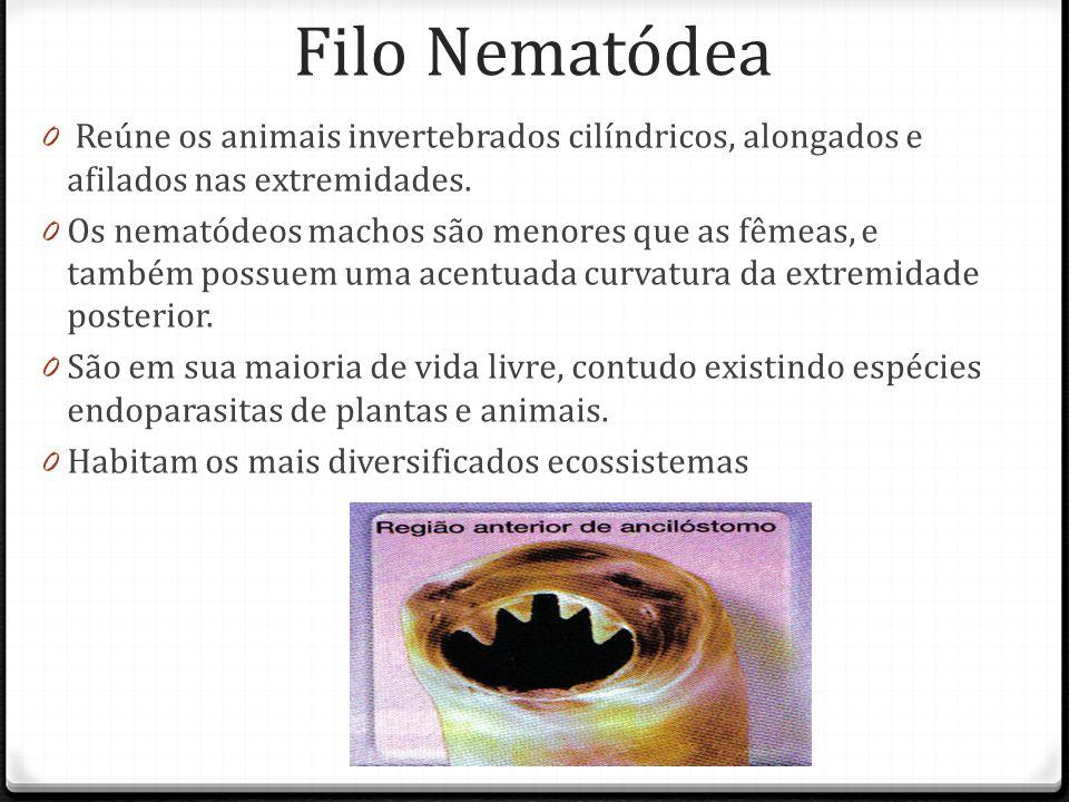 Filo Nematódea Reúne os animais invertebrados cilíndricos, alongados e afilados nas extremidades.