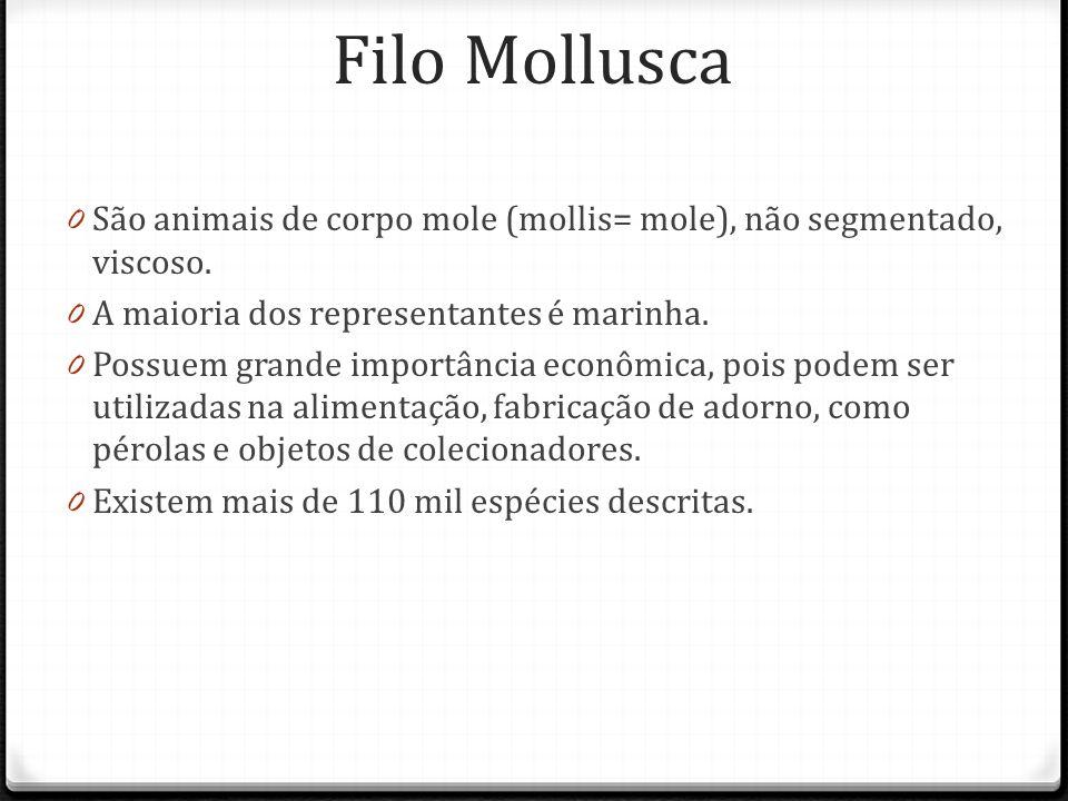 Filo Mollusca São animais de corpo mole (mollis= mole), não segmentado, viscoso. A maioria dos representantes é marinha.