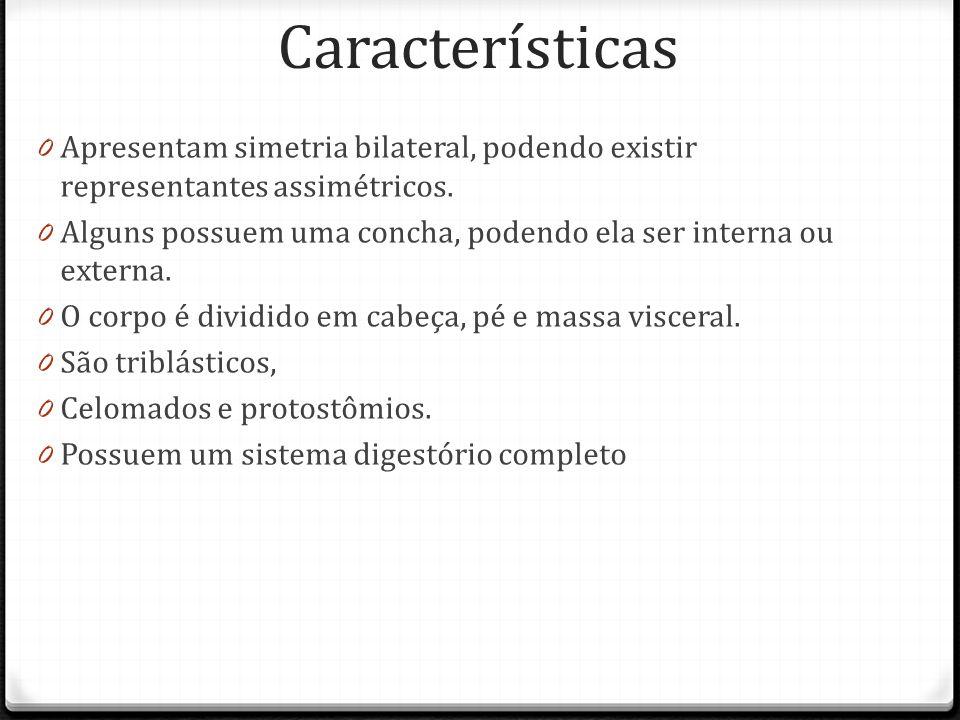 Características Apresentam simetria bilateral, podendo existir representantes assimétricos.
