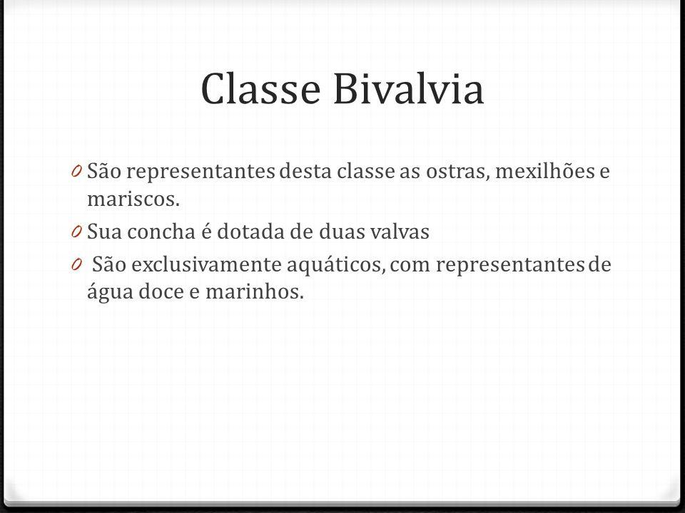 Classe Bivalvia São representantes desta classe as ostras, mexilhões e mariscos. Sua concha é dotada de duas valvas.