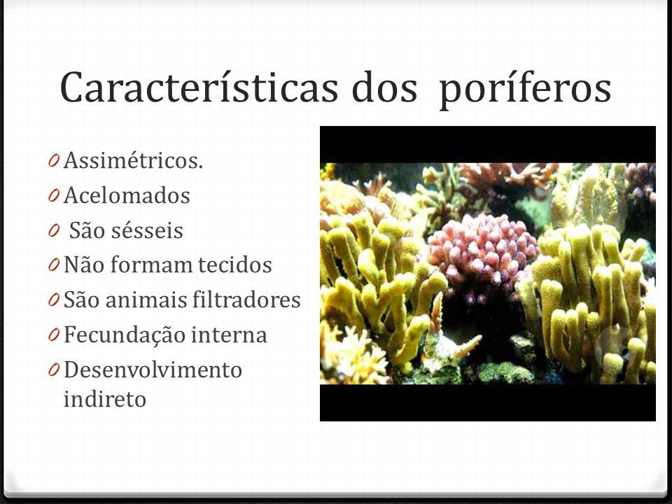 Características dos poríferos