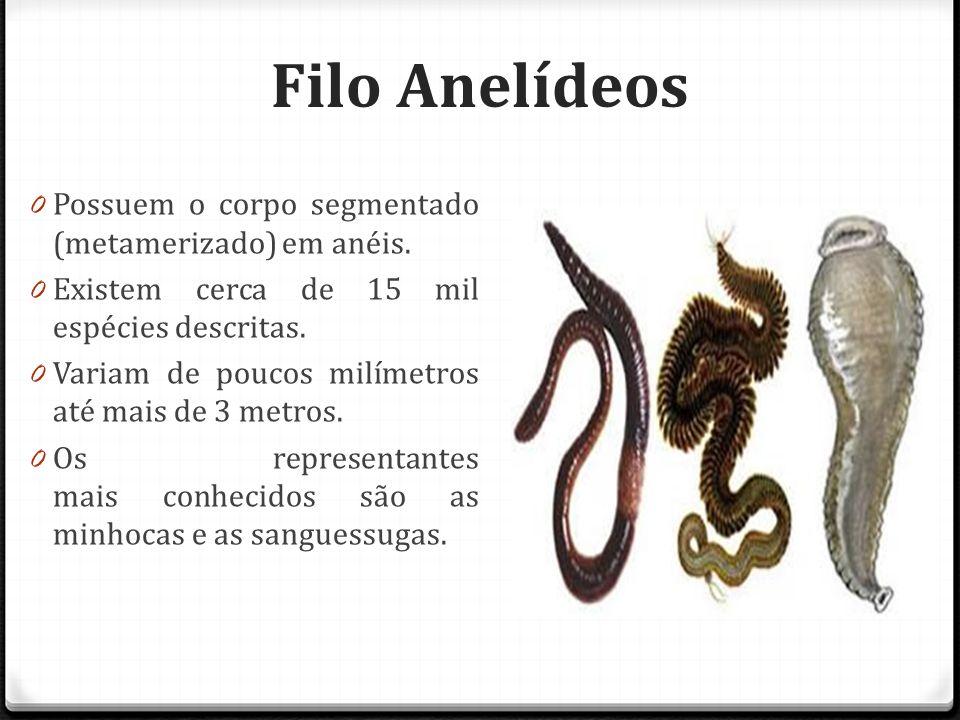 Filo Anelídeos Possuem o corpo segmentado (metamerizado) em anéis.