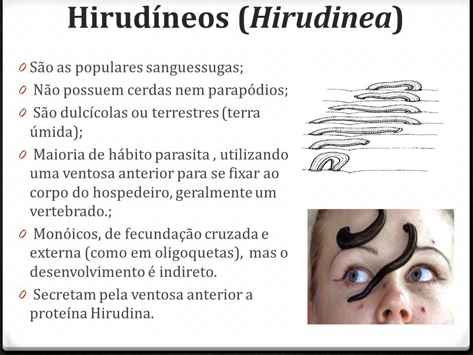 Hirudíneos (Hirudinea)