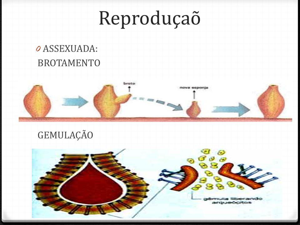Reproduçaõ ASSEXUADA: BROTAMENTO GEMULAÇÃO