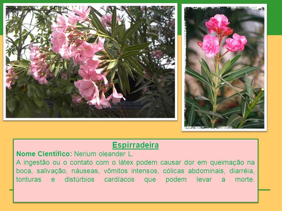 Espirradeira Nome Científico: Nerium oleander L.