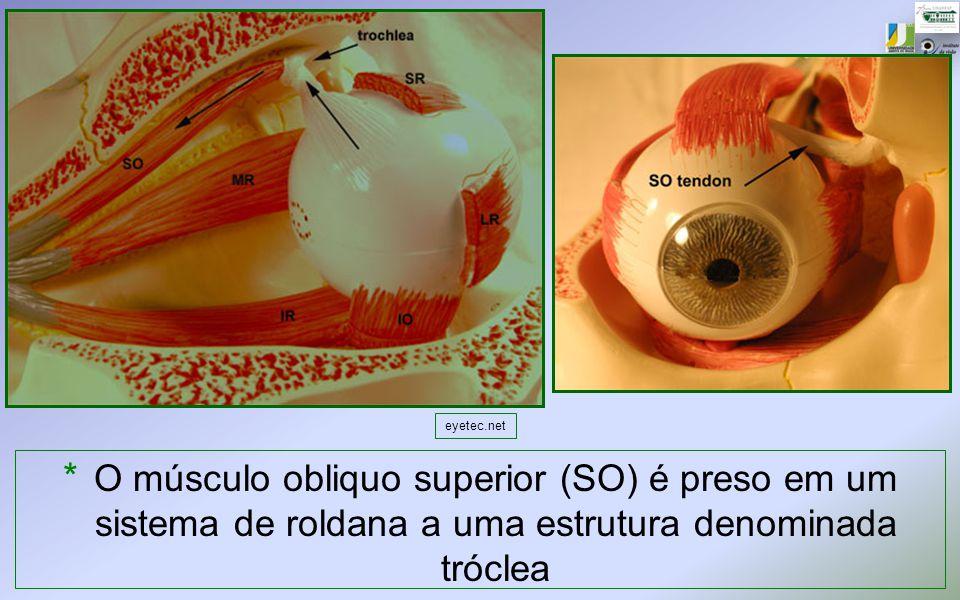 eyetec.net O músculo obliquo superior (SO) é preso em um sistema de roldana a uma estrutura denominada tróclea.