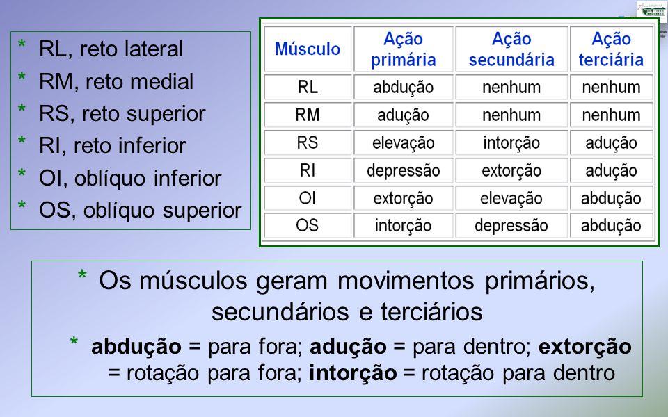 Os músculos geram movimentos primários, secundários e terciários