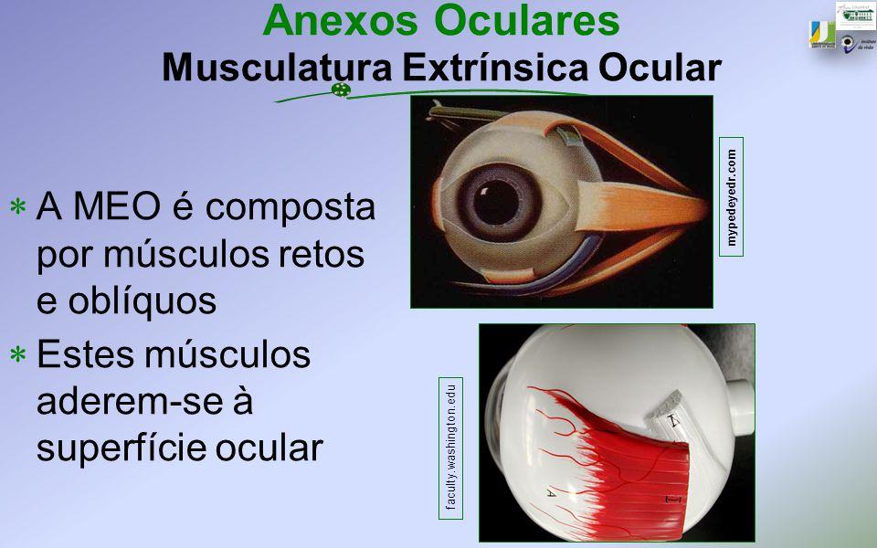 Anexos Oculares Musculatura Extrínsica Ocular
