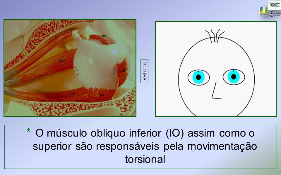 eyetec.net O músculo obliquo inferior (IO) assim como o superior são responsáveis pela movimentação torsional.