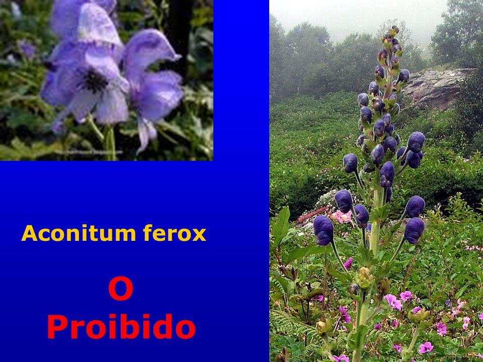 Aconitum ferox O Proibido