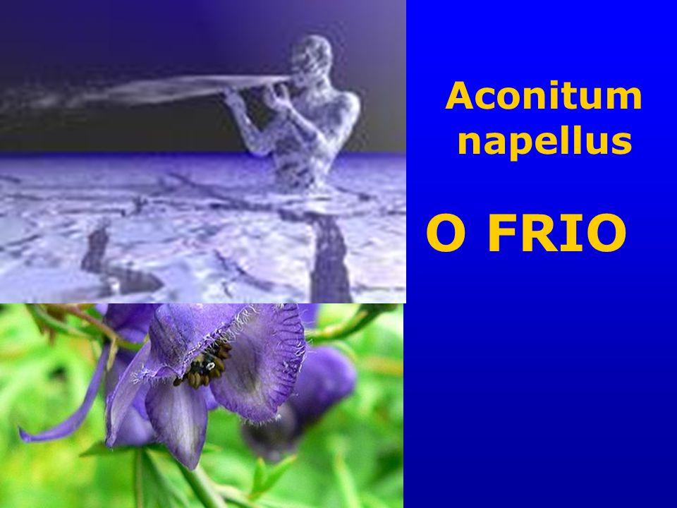 Aconitum napellus O FRIO