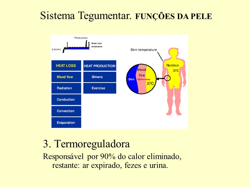 Sistema Tegumentar. FUNÇÕES DA PELE