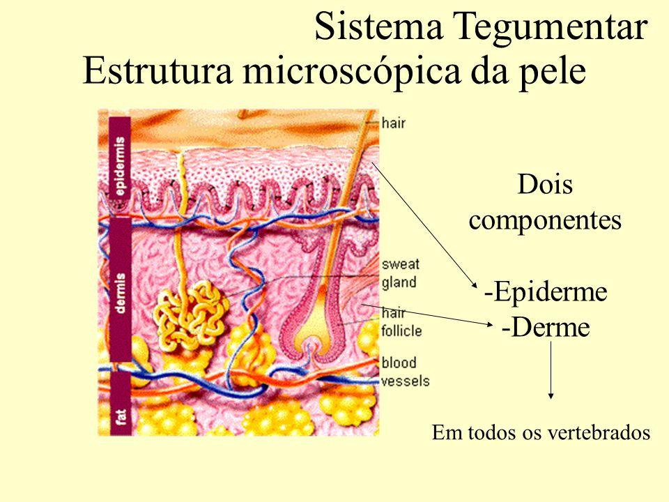 Estrutura microscópica da pele