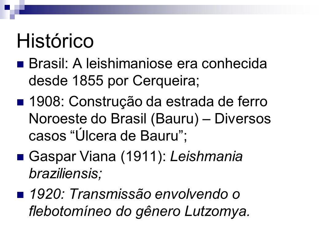 Histórico Brasil: A leishimaniose era conhecida desde 1855 por Cerqueira;