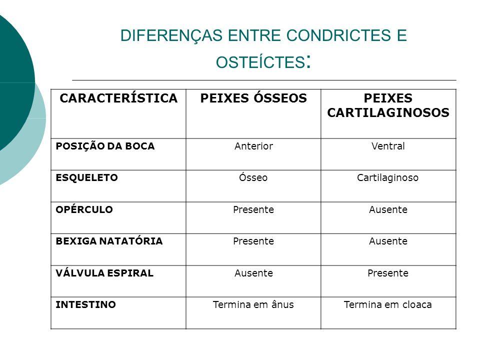 DIFERENÇAS ENTRE CONDRICTES E OSTEÍCTES: