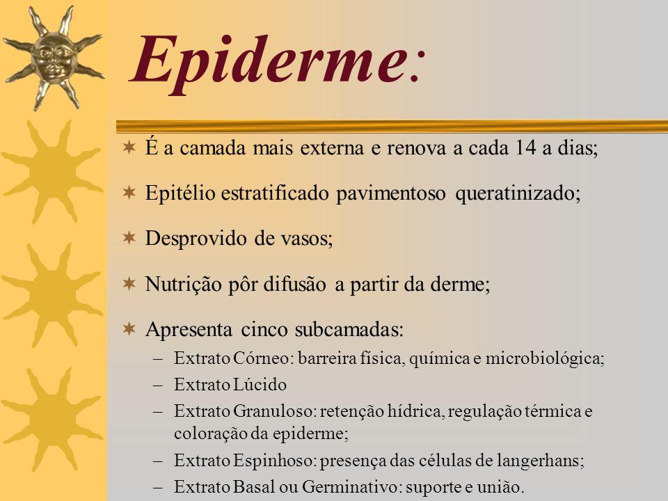 Epiderme: É a camada mais externa e renova a cada 14 a dias;