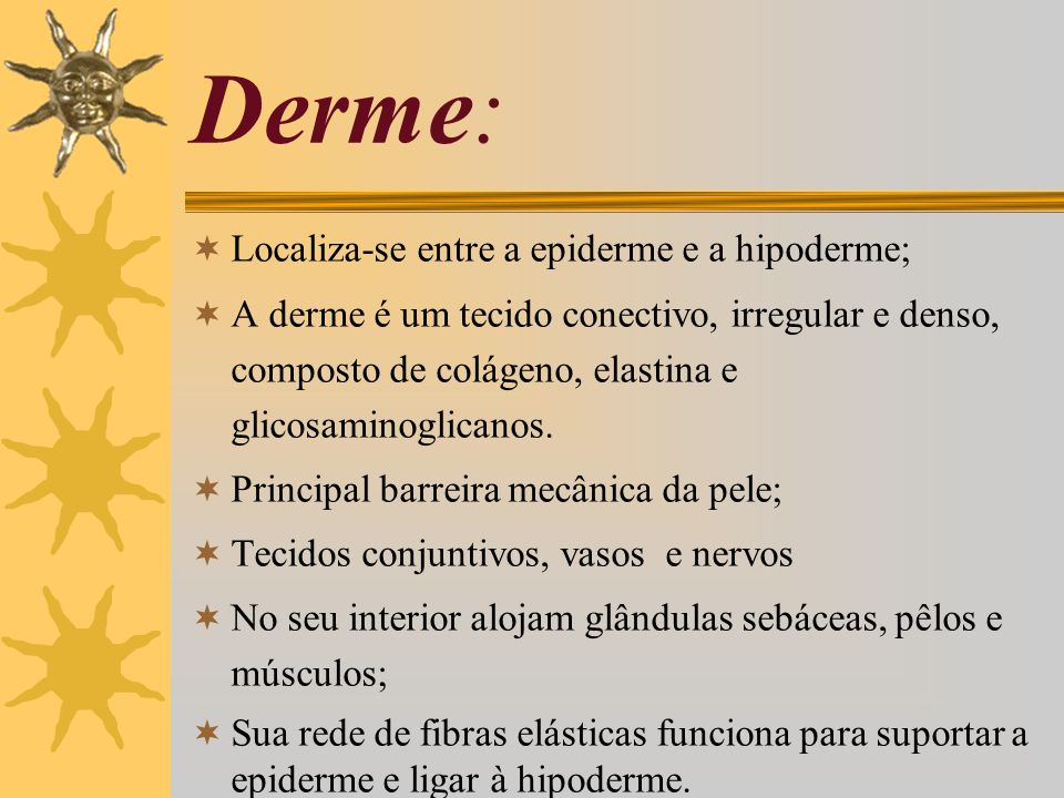 Derme: Localiza-se entre a epiderme e a hipoderme;