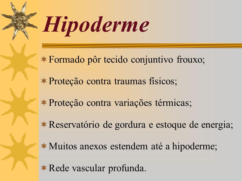Hipoderme Formado pôr tecido conjuntivo frouxo;