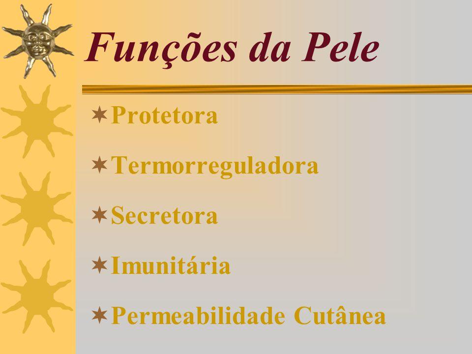 Funções da Pele Protetora Termorreguladora Secretora Imunitária