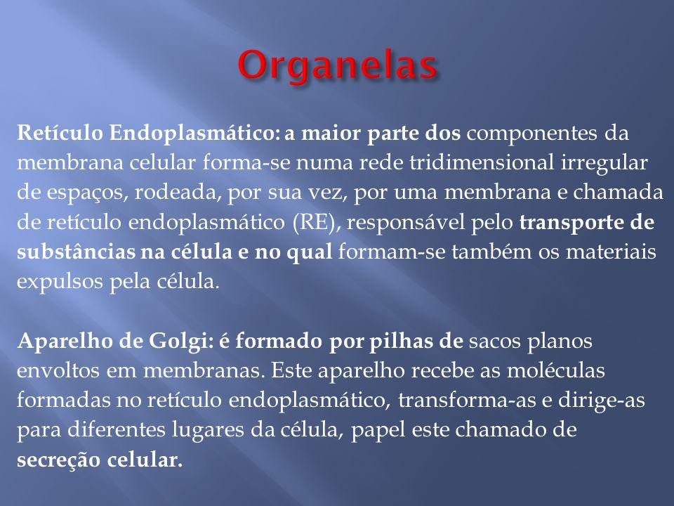 Organelas Retículo Endoplasmático: a maior parte dos componentes da