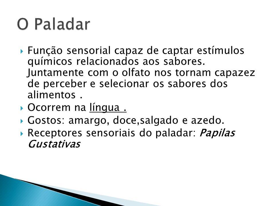 O Paladar