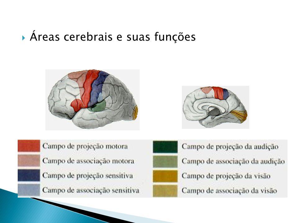 Áreas cerebrais e suas funções