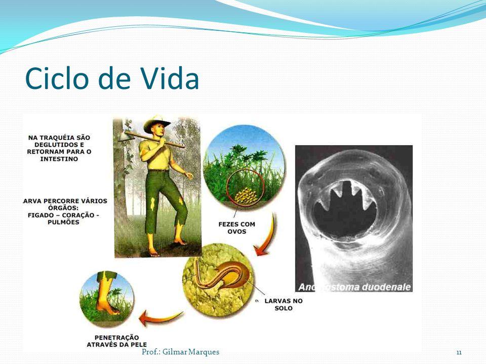 Ciclo de Vida Prof.: Gilmar Marques