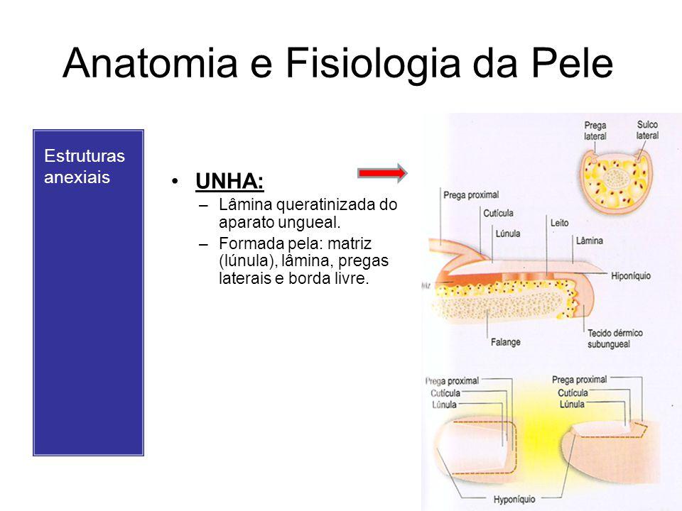 Anatomia e Fisiologia da Pele
