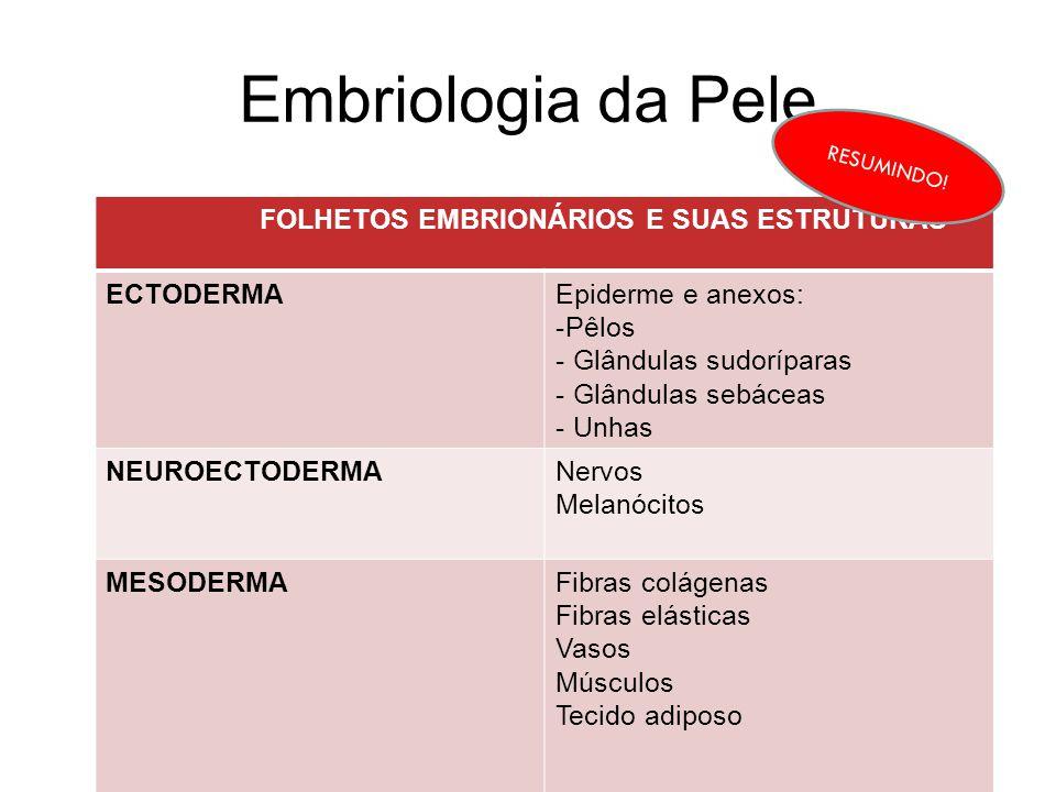 Embriologia da Pele FOLHETOS EMBRIONÁRIOS E SUAS ESTRUTURAS ECTODERMA