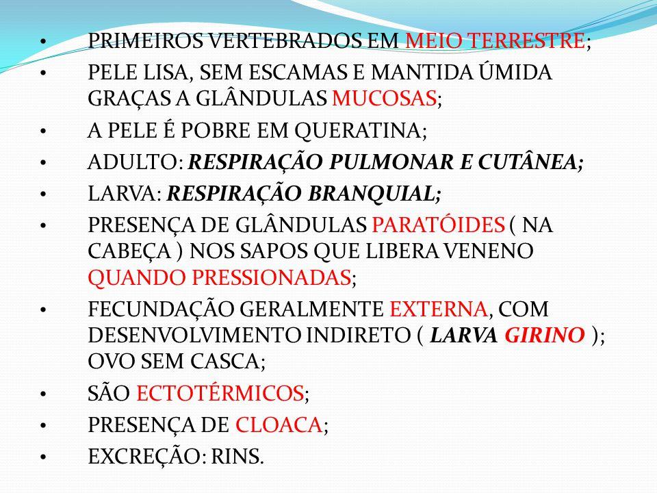 PRIMEIROS VERTEBRADOS EM MEIO TERRESTRE;
