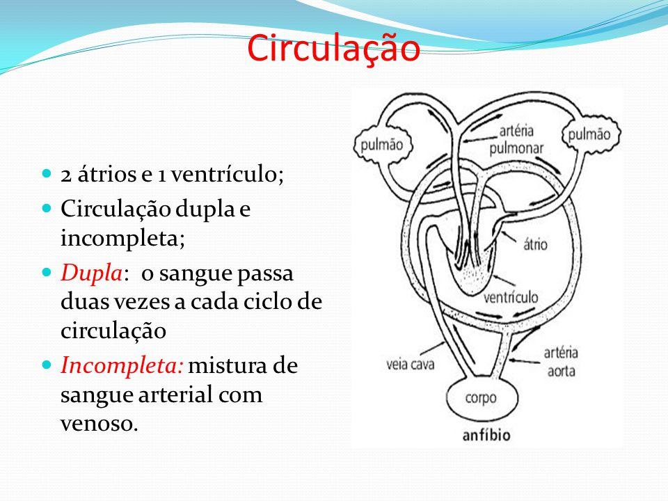 Circulação 2 átrios e 1 ventrículo; Circulação dupla e incompleta;