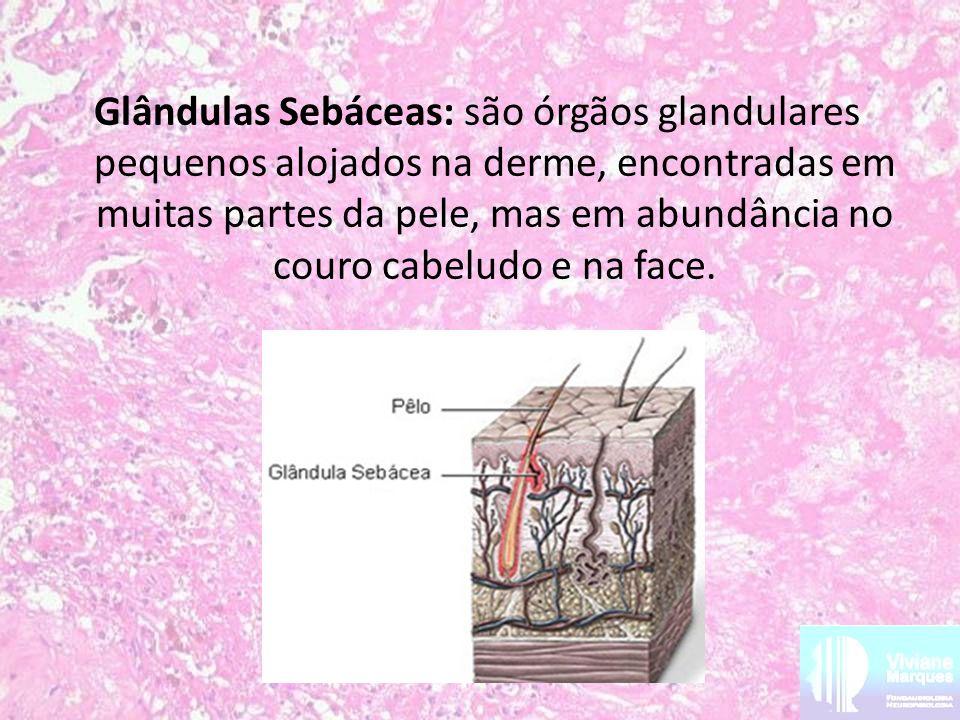 Glândulas Sebáceas: são órgãos glandulares pequenos alojados na derme, encontradas em muitas partes da pele, mas em abundância no couro cabeludo e na face.