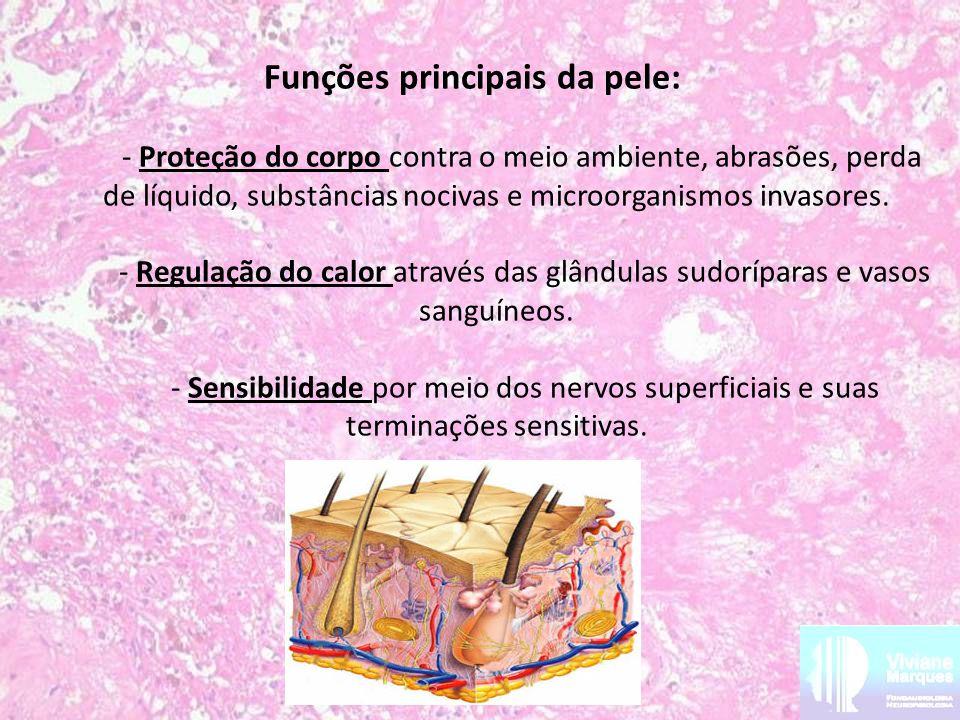 Funções principais da pele: - Proteção do corpo contra o meio ambiente, abrasões, perda de líquido, substâncias nocivas e microorganismos invasores.
