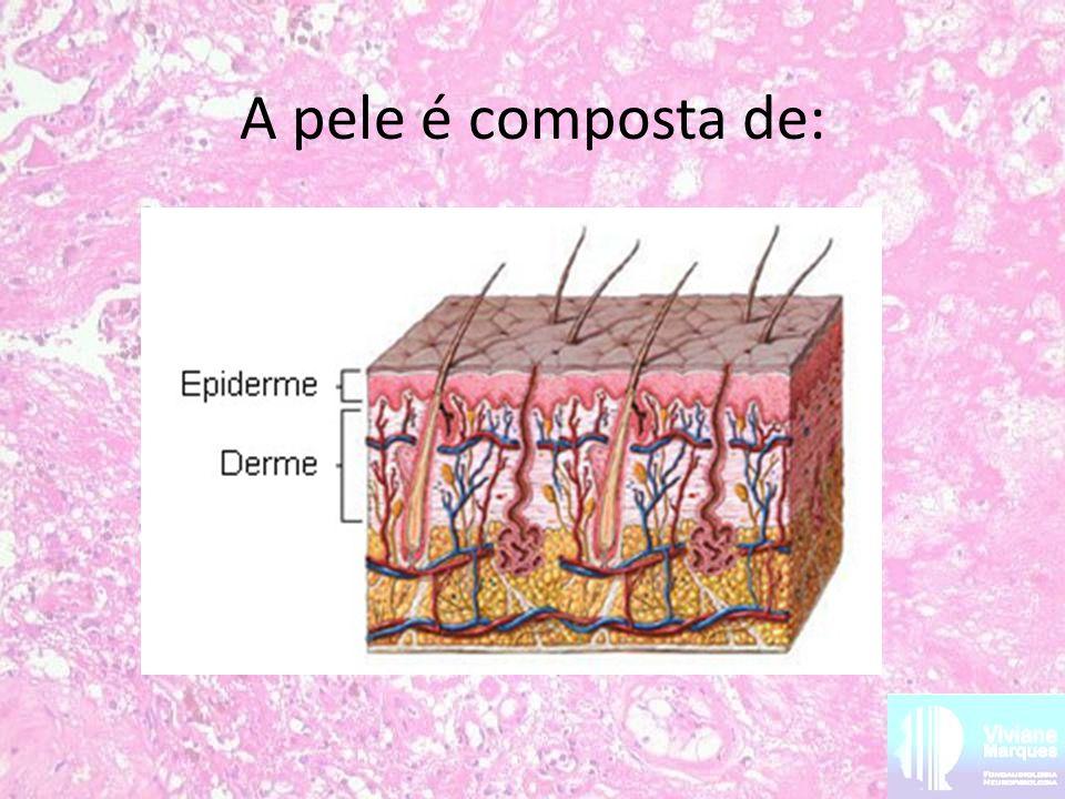 A pele é composta de:
