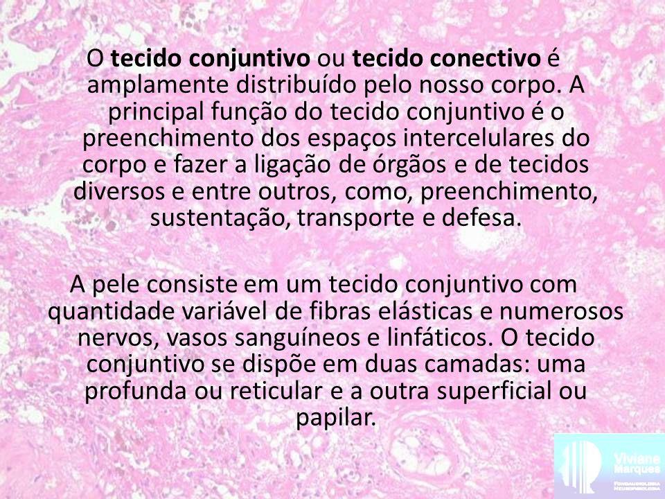 O tecido conjuntivo ou tecido conectivo é amplamente distribuído pelo nosso corpo.