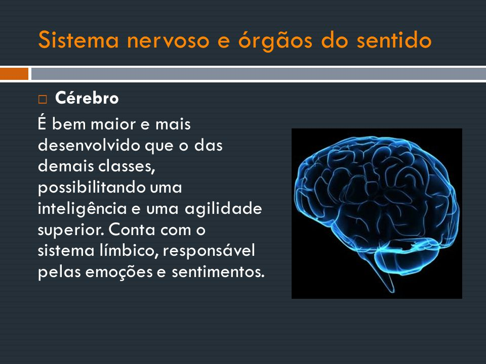 Sistema nervoso e órgãos do sentido