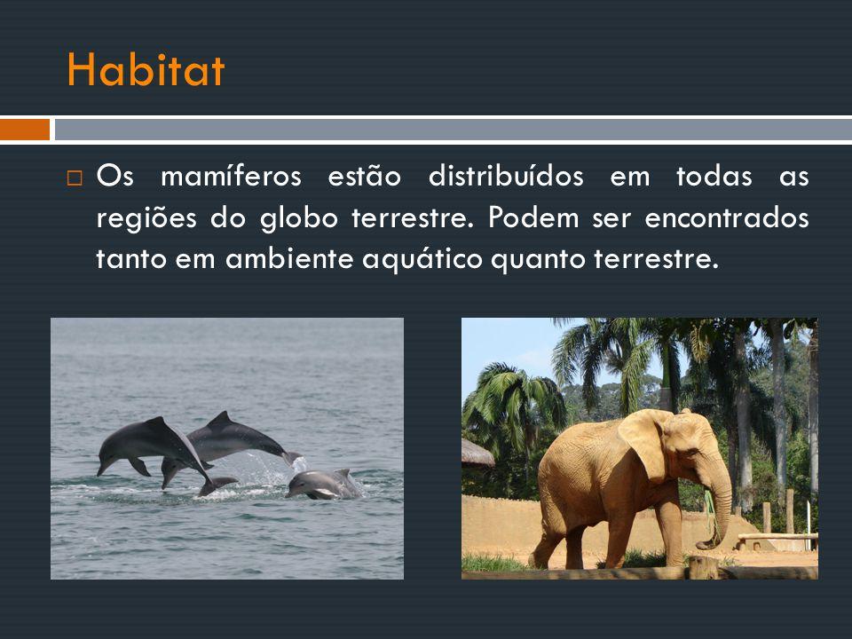Habitat Os mamíferos estão distribuídos em todas as regiões do globo terrestre.