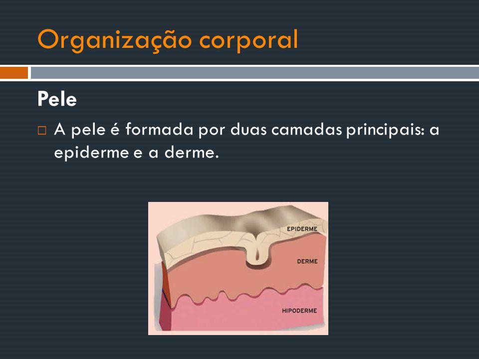 Organização corporal Pele