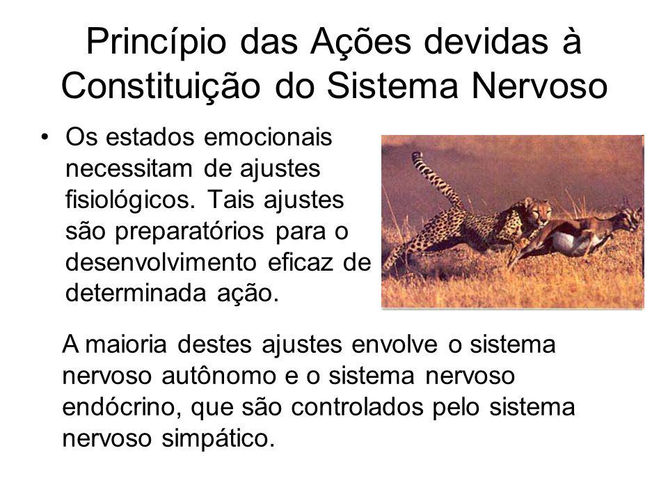 Princípio das Ações devidas à Constituição do Sistema Nervoso