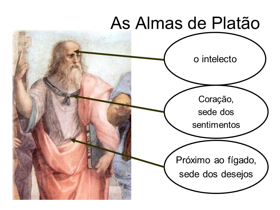 As Almas de Platão o intelecto Próximo ao fígado, sede dos desejos