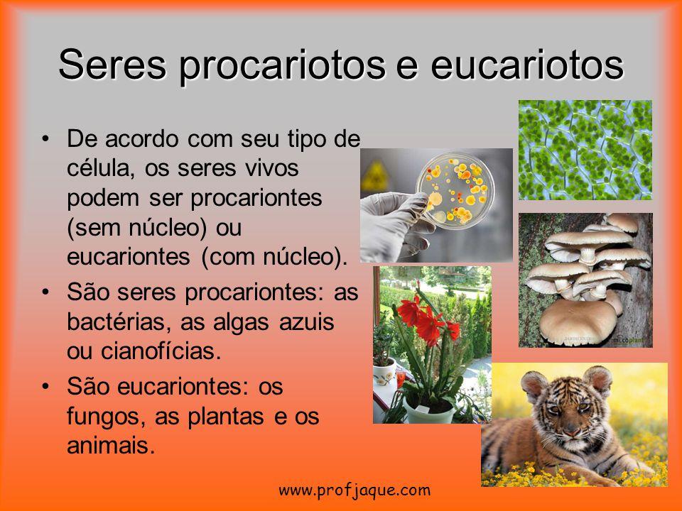 Seres procariotos e eucariotos