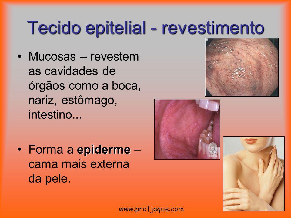 Tecido epitelial - revestimento