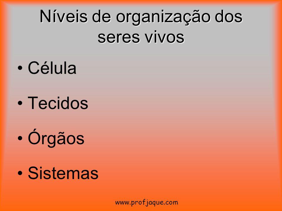 Níveis de organização dos seres vivos