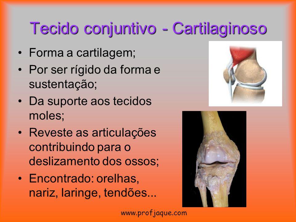 Tecido conjuntivo - Cartilaginoso