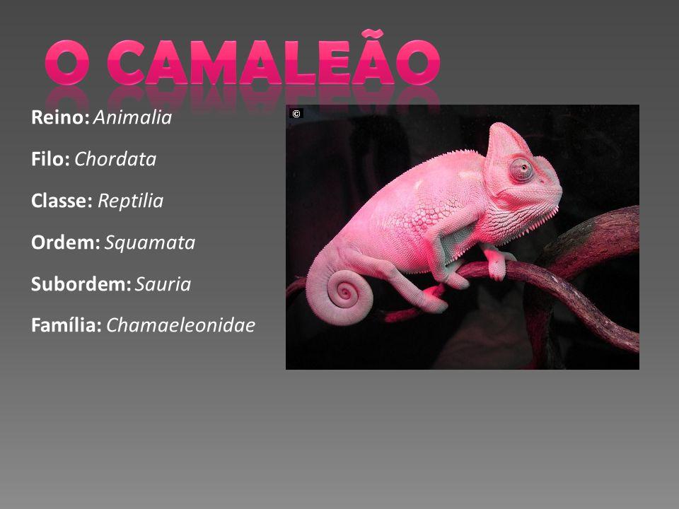 O CAMALEÃO Reino: Animalia Filo: Chordata Classe: Reptilia