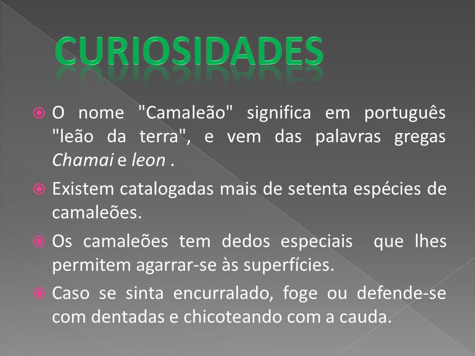 Curiosidades O nome Camaleão significa em português leão da terra , e vem das palavras gregas Chamai e leon .